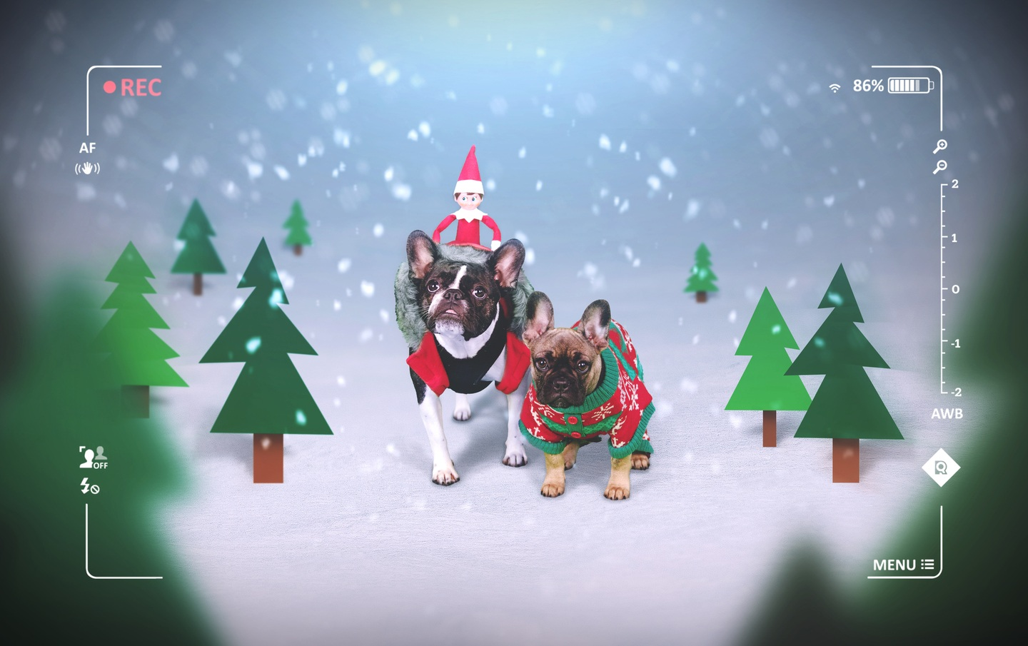 Two dogs transport the Elf on a Shelf